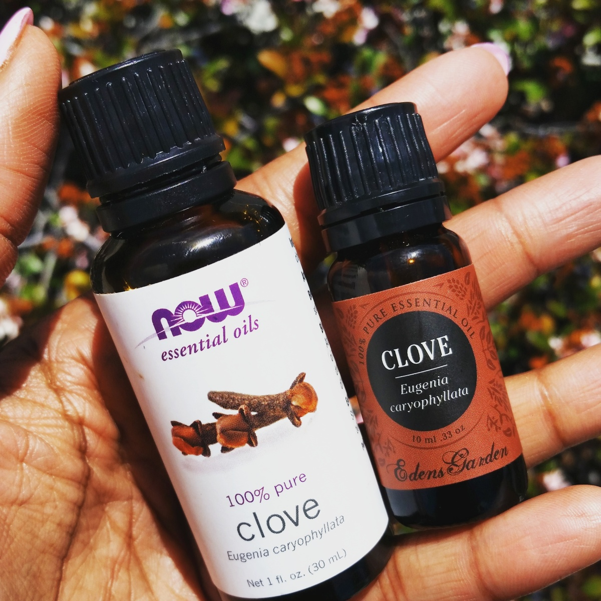 Health & Beauty Benefits of Clove Oil
