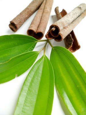cinnamon-leaf-oil-500x500